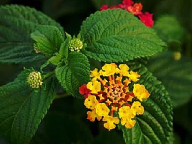 Bán rau rừng Tây Ninh món quà quý từ thiên nhiên
