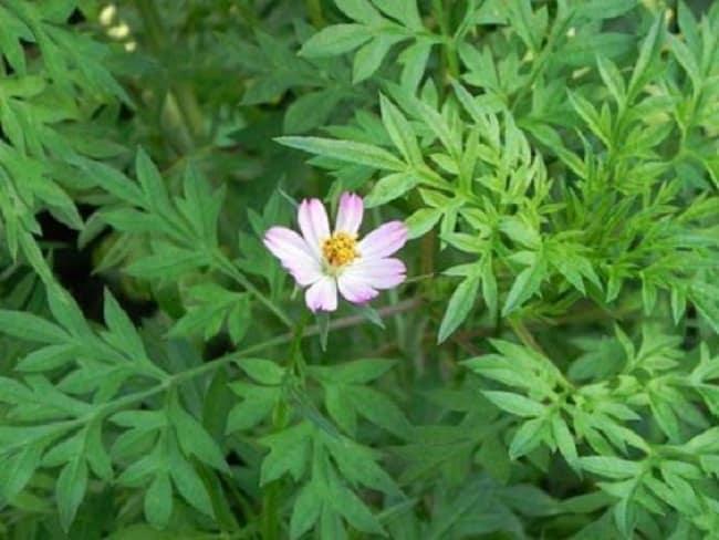 Có các loại rau rừng Tây Ninh nào?